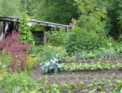 """Vortrag """"Vielfalt im Garten"""" in Prägraten"""